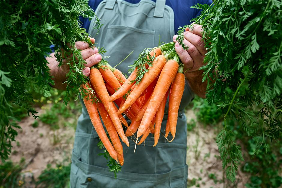 Give a hoot for root vegetables: perfect root veggies any time of year