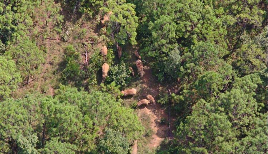 China's famous wandering elephants finally make it home
