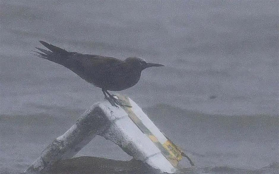 Typhoon Chanthu 'blows' rare wild bird to Shanghai shores