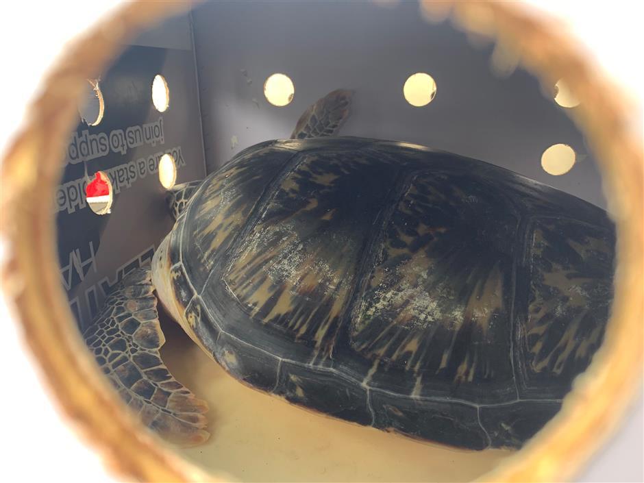 Freedom beckons as endangered turtles take flight to Hainan