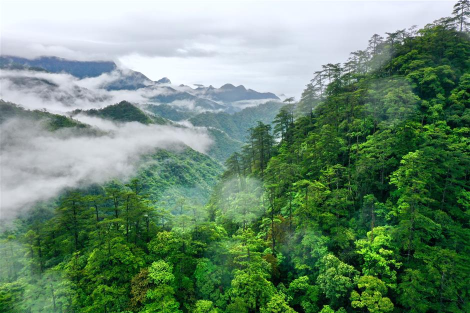 Check out China's national parks to see natural wonders and biodiversity miracles
